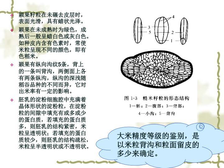颖果籽粒在未碾去皮层时,表面光滑,具有蜡状光泽。