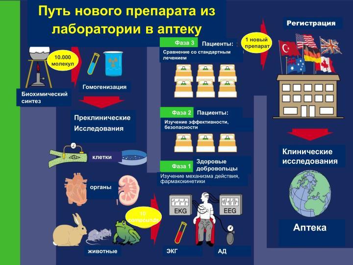 Путь нового препарата из лаборатории в аптеку