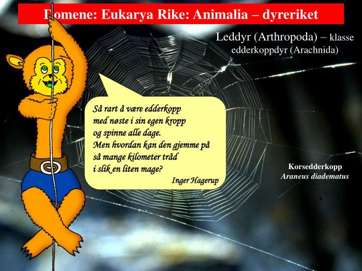 Leddyr (Arthropoda) –