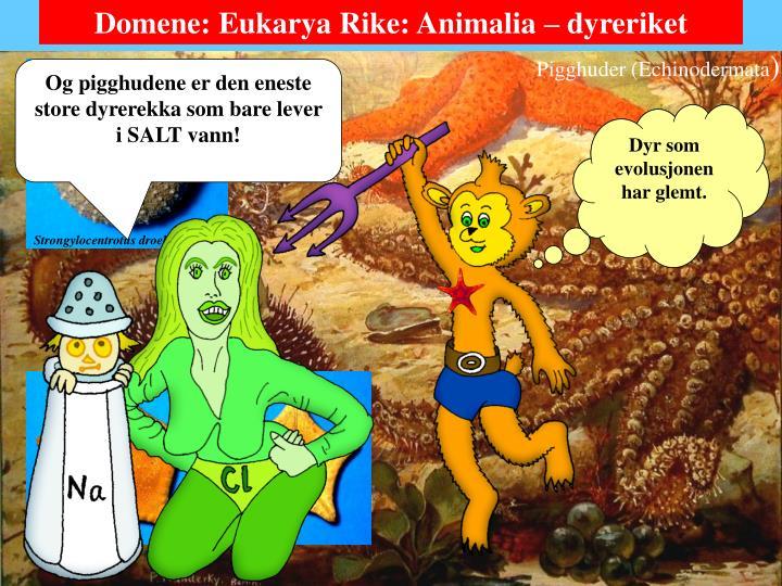 Domene: Eukarya Rike: Animalia – dyreriket
