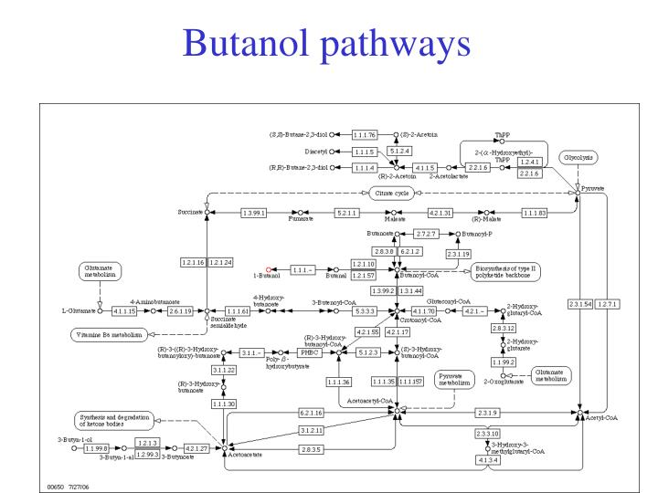 Butanol pathways