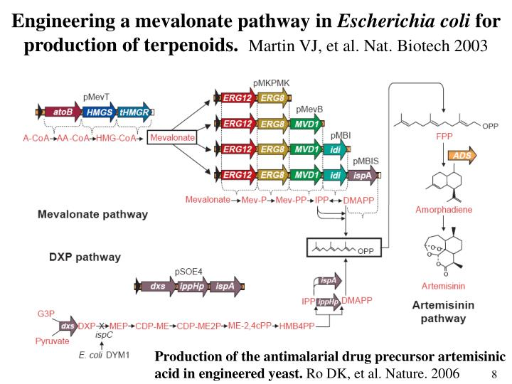 Engineering a mevalonate pathway in