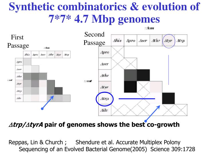 Synthetic combinatorics & evolution of 7*7* 4.7 Mbp genomes