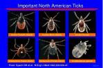 important north american ticks