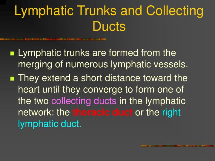 Lymphatic Trunks and Collecting Ducts