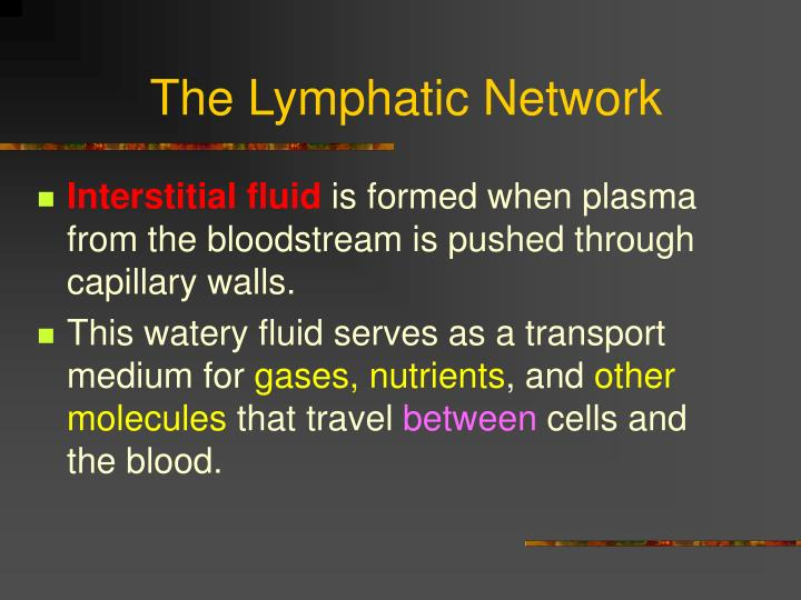 The Lymphatic Network