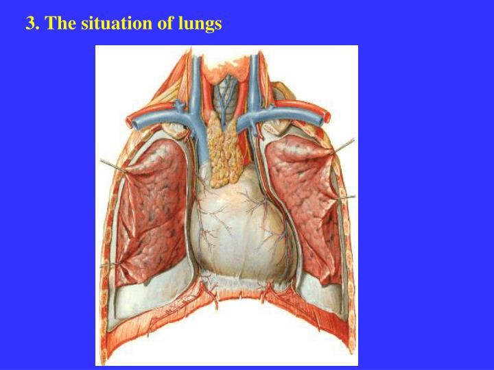 3. The situation of lungs