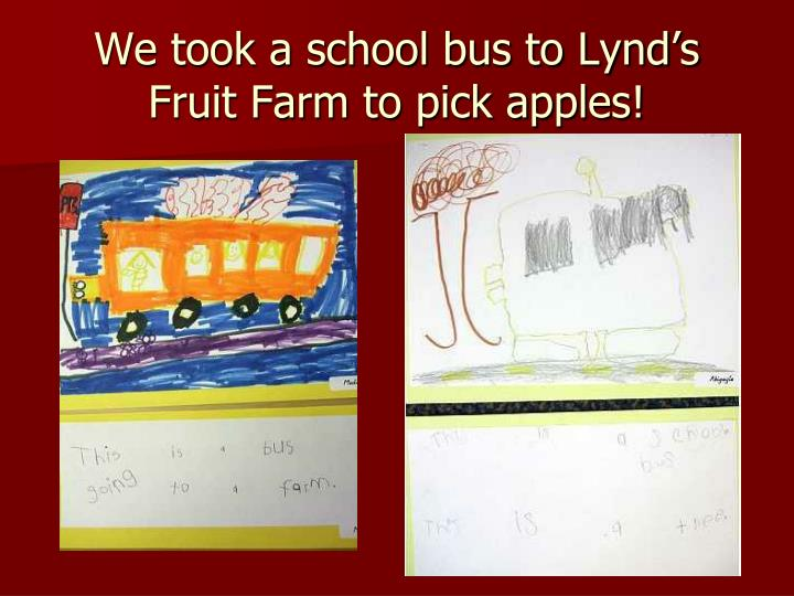 We took a school bus to lynd s fruit farm to pick apples