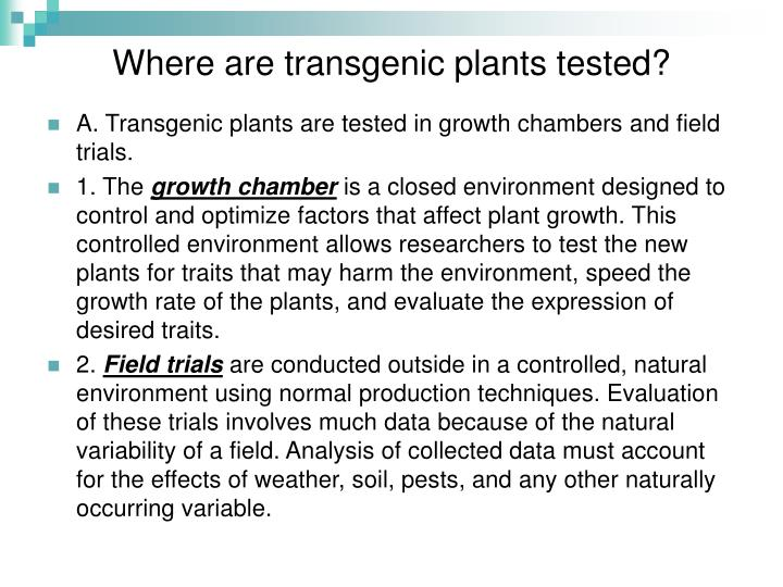 Where are transgenic plants tested?