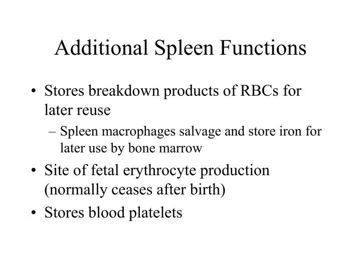 Additional Spleen Functions