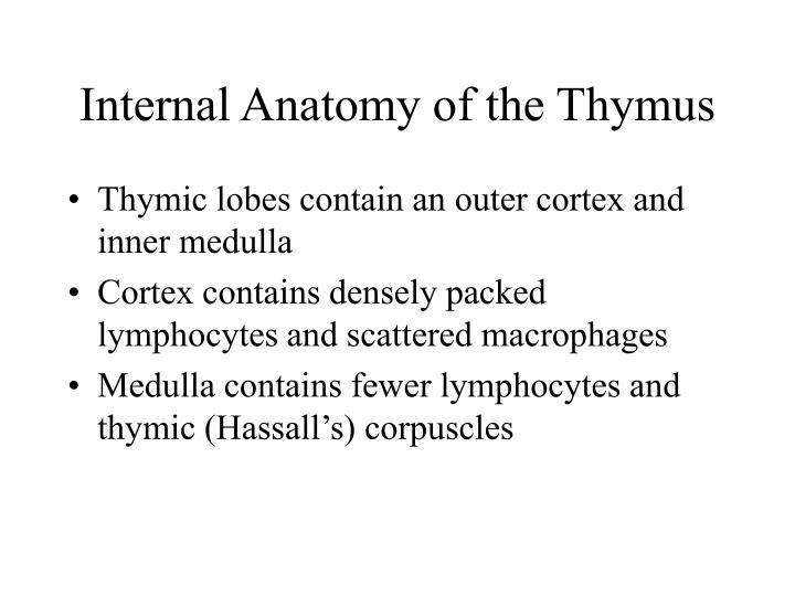 Internal Anatomy of the Thymus