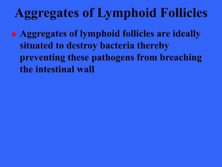 Aggregates of Lymphoid Follicles