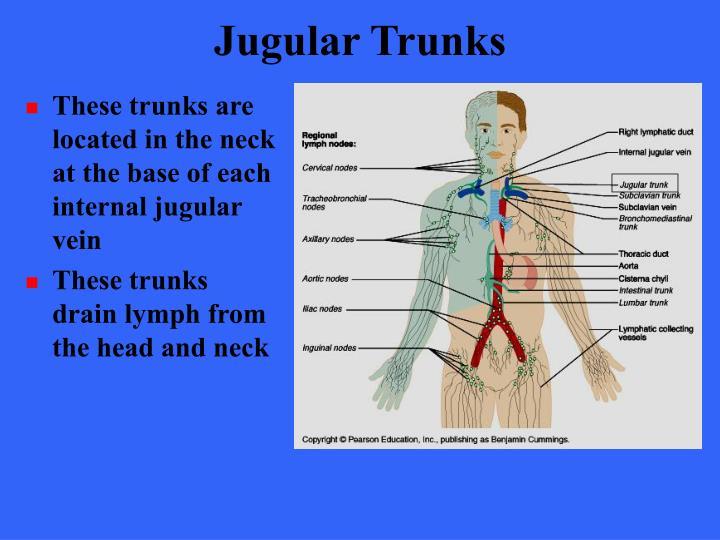 Jugular Trunks