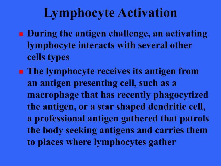 Lymphocyte Activation