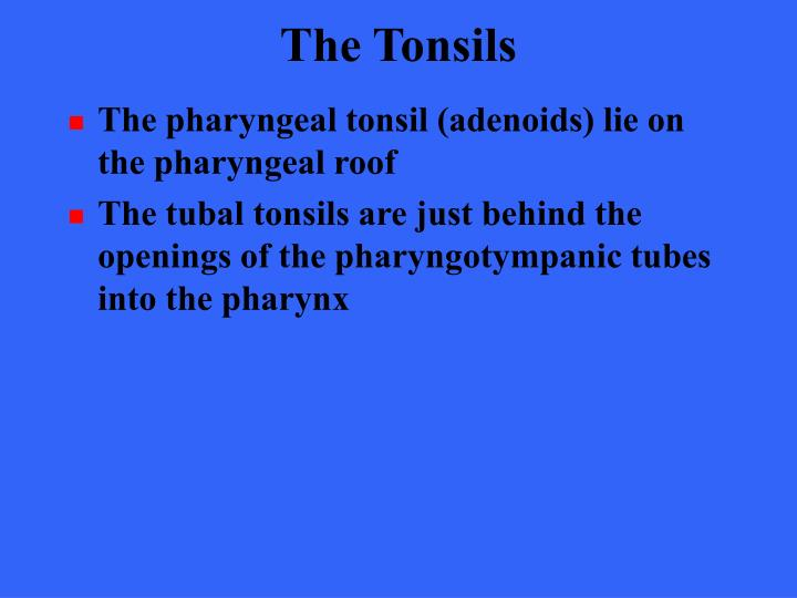 The Tonsils