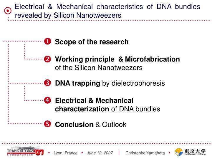 Electrical mechanical characteristics of dna bundles