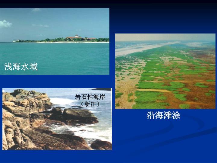 岩石性海岸