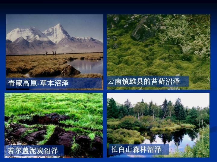 云南镇雄县的苔藓沼泽