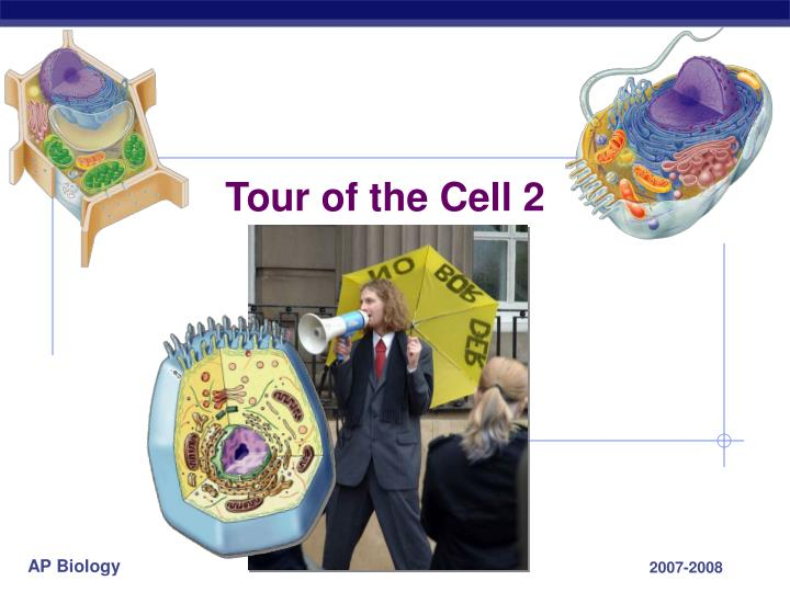 tour of the cell 2 n.