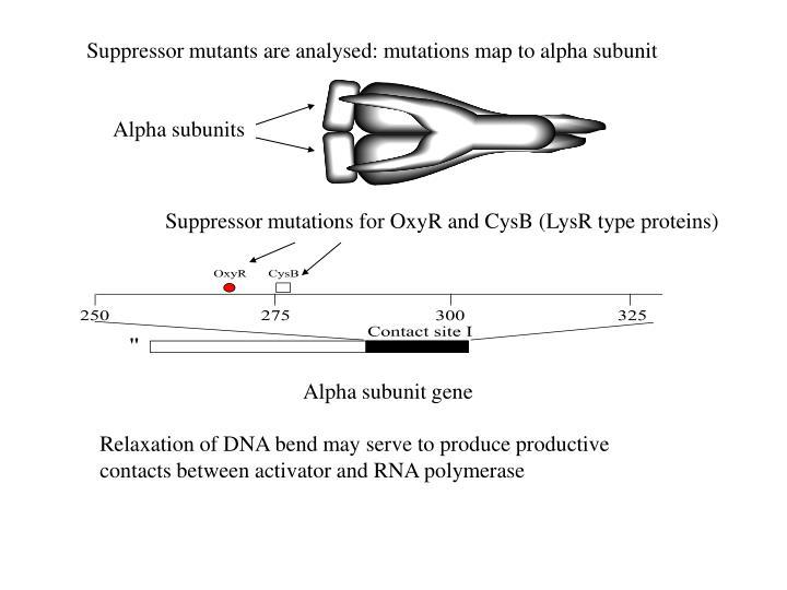 Alpha subunits