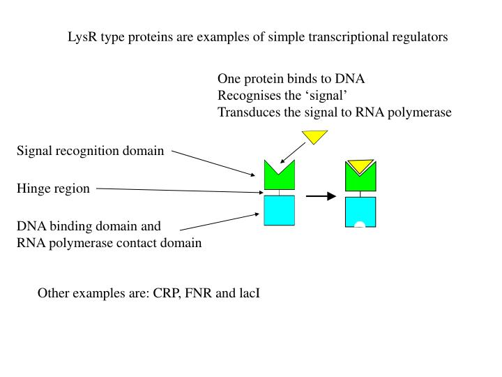 Signal recognition domain