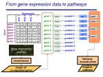 from gene expression data to pathways