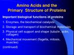 amino acids and the primary structure of proteins