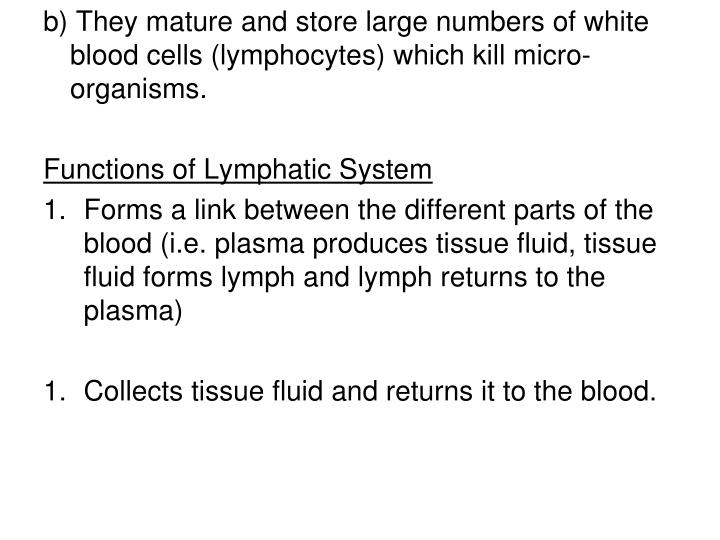 b) They mature and store large numbers of white blood cells (lymphocytes) which kill micro-organisms.