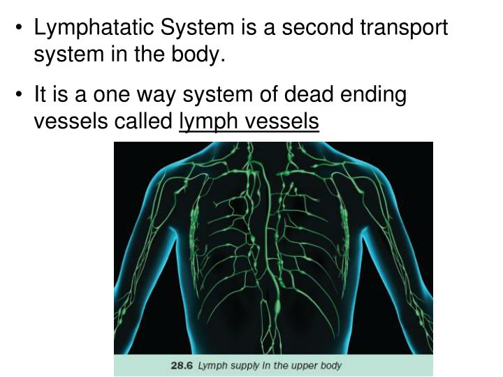 Lymphatatic System is a second transport system in the body.