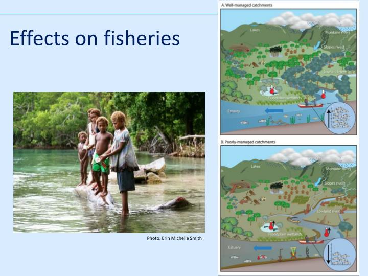 Effects on fisheries