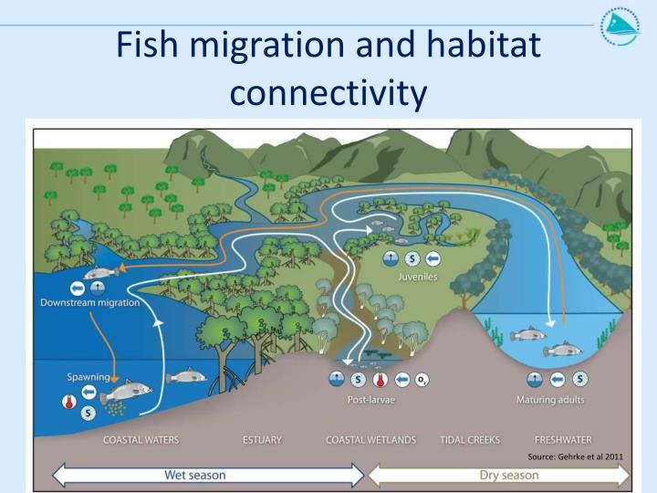 Fish migration and habitat connectivity