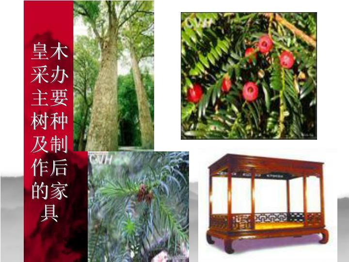 皇木采办主要树种及制作后的家具