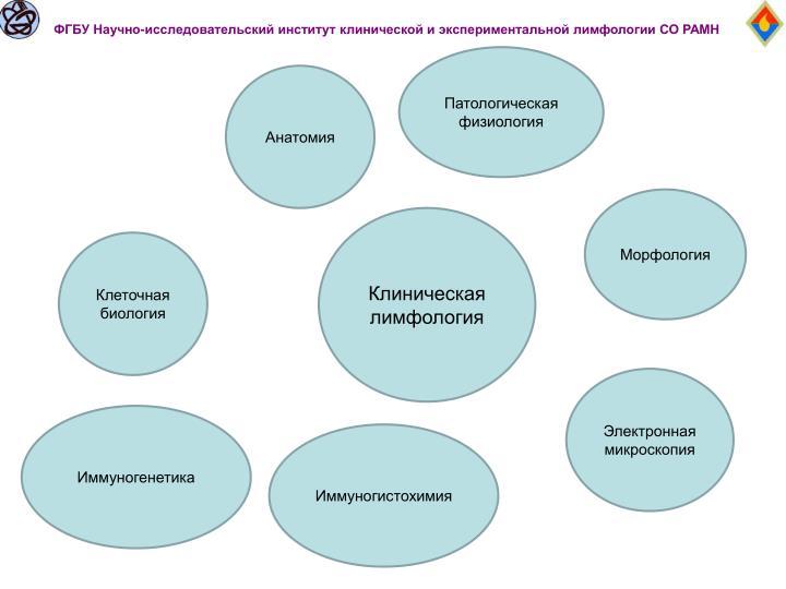 ФГБУ Научно-исследовательский институт клинической и экспериментальной лимфологии СО РАМН