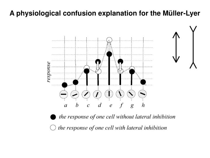 A physiological confusion explanation for the Müller-Lyer