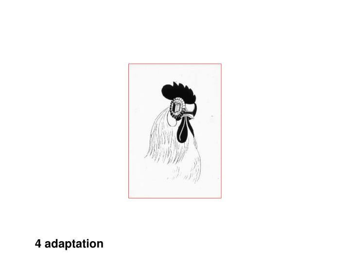 4 adaptation