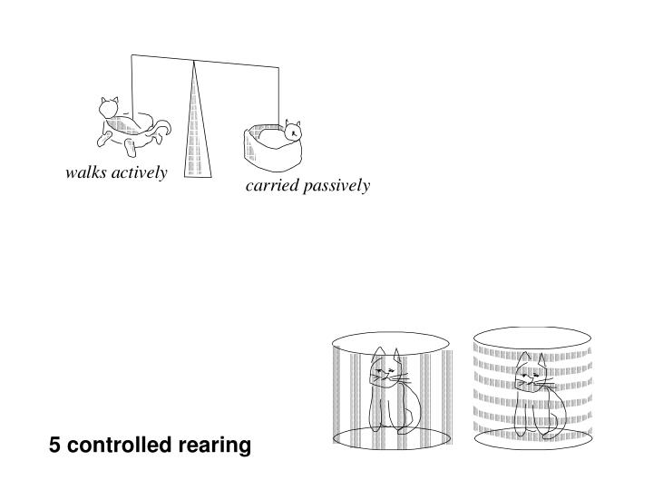 5 controlled rearing