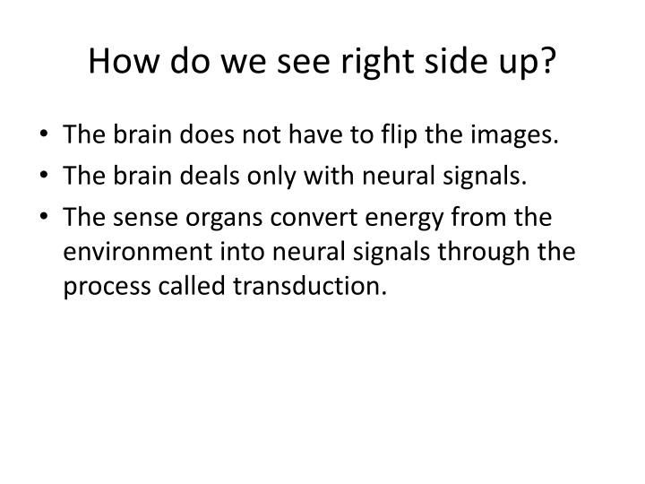 How do we see right side up?