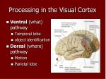 processing in the visual cortex1