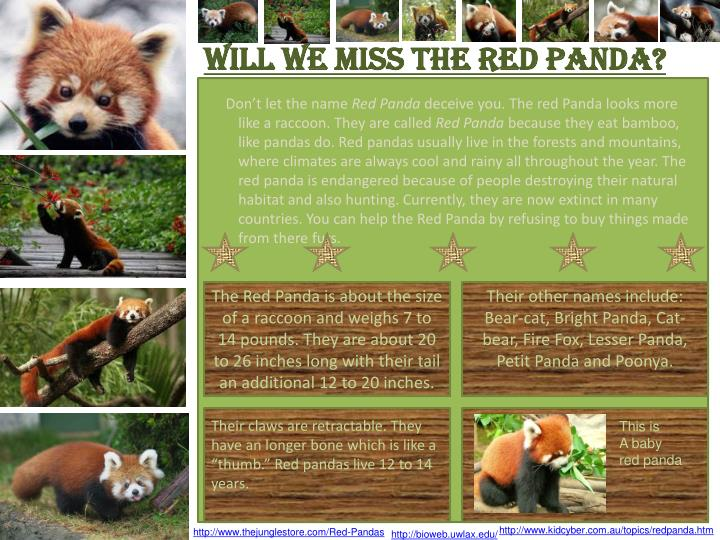 WILL WE MISS THE RED PANDA?
