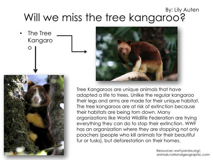 Will we miss the tree kangaroo?