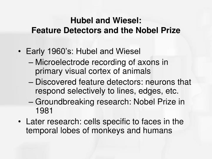Hubel and Wiesel: