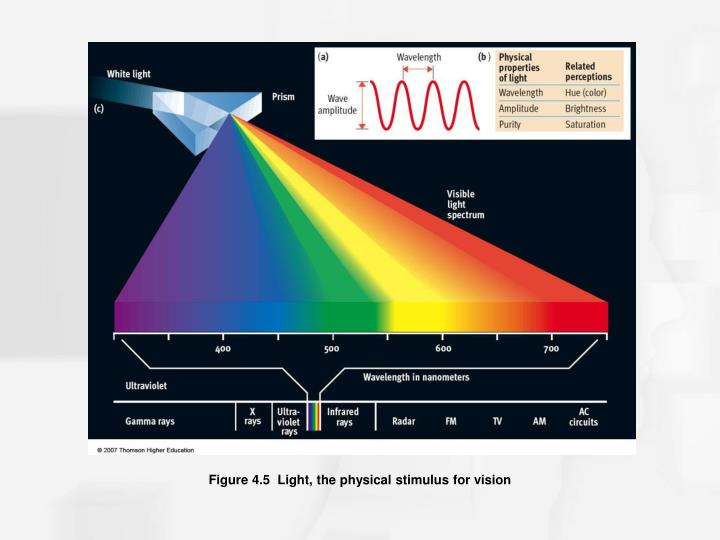 Figure 4.5  Light, the physical stimulus for vision