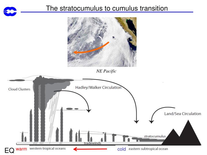 The stratocumulus to cumulus transition