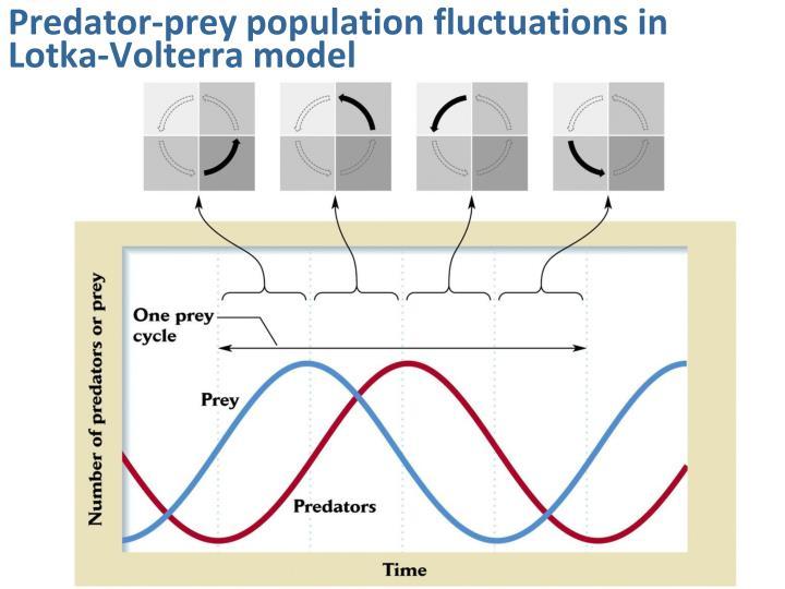 Predator-prey population fluctuations in