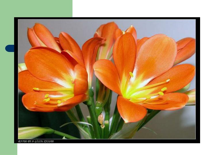 联觉---橙色