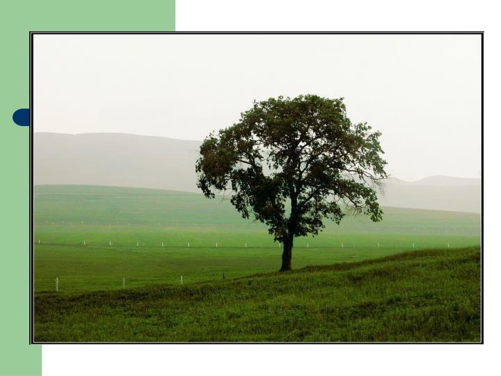 联觉---绿色