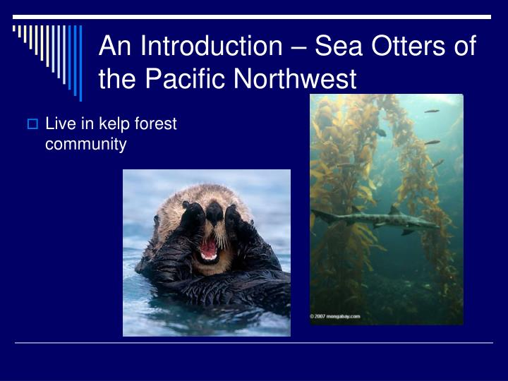 An introduction sea otters of the pacific northwest