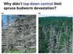 why didn t top down control limit spruce budworm devastation