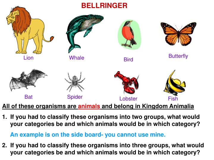 PPT - All of these organisms are animals and belong in ...