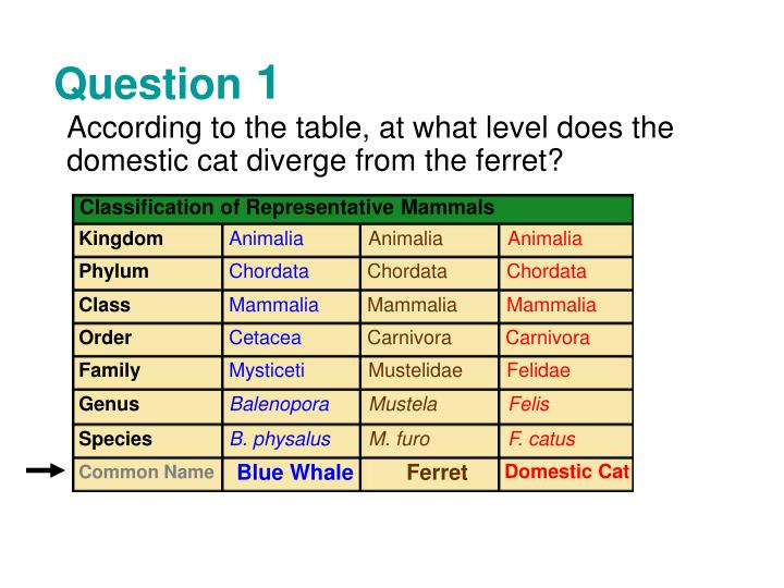 Table kingdom animalia Ncert Class According To The Table At What Level Does The Domestic Cat Diverge From The Ferret Classification Of Representative Mammals Kingdom Animalia Bianoti Ppt All Of These Organisms Are Animals And Belong In Kingdom